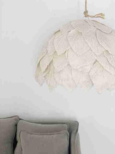 Cotton Petal